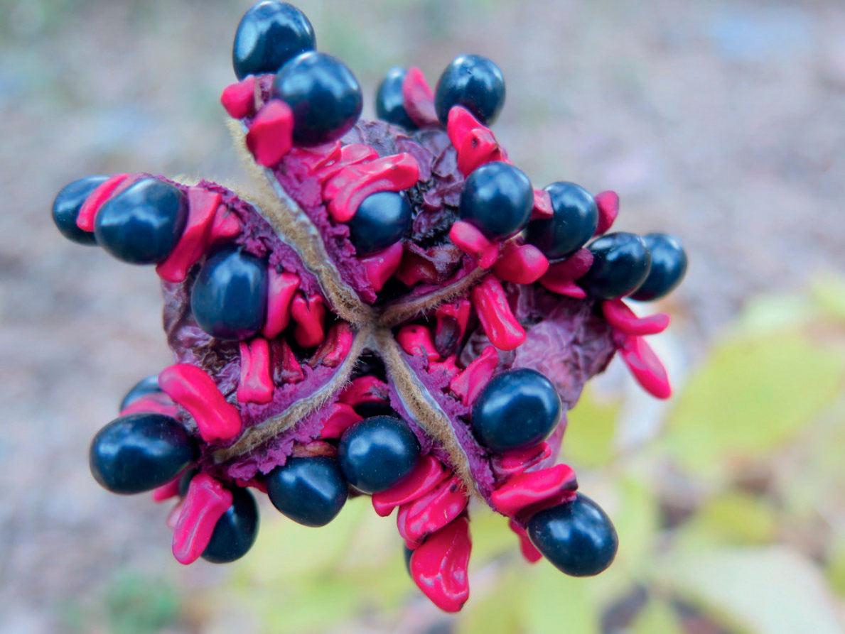 TaCoBi – Botánica